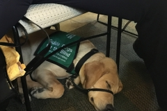 Guide Dog at Non-Profit Fair